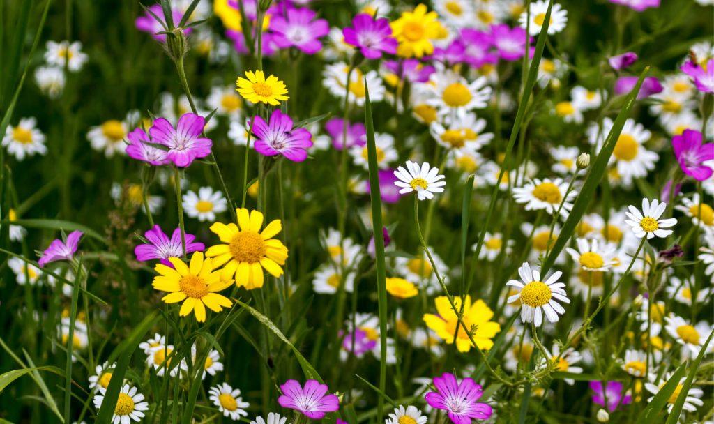 So schön können Wiesen sein; Fotocredit: Shutterstock/Philip Bird LRPS CPAGB