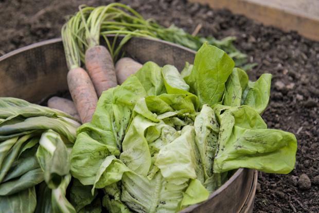 Energieleben Salatpiraten Urban Gardening