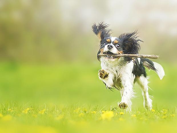 Wer einen Hund hat, ist bei langen Spaziergängen wohl klar im Vorteil!