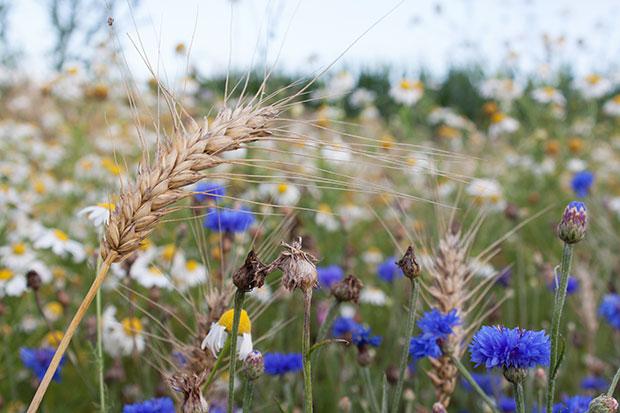 img_biologische-landwirtschaft_2_620x414