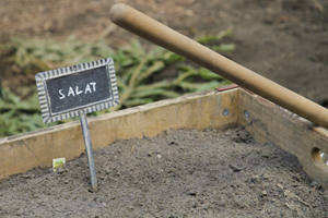 Energieleben Salatpiraten