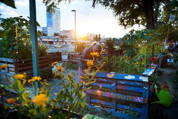 Urban Gardening Projekte Wien Garden Ftempo