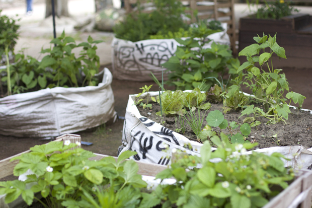 Grünstück PEPH Urban Garden