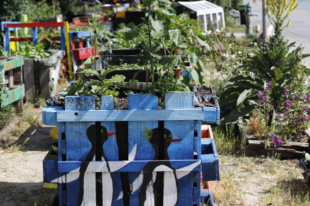 Urban Garden: Gemeinschaftsgarten Donaukanal