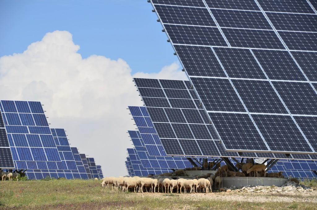 Solar power plant with grazing sheep © Dollarphotoclub