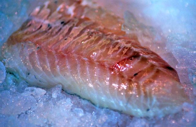 Quecksilber Fisch
