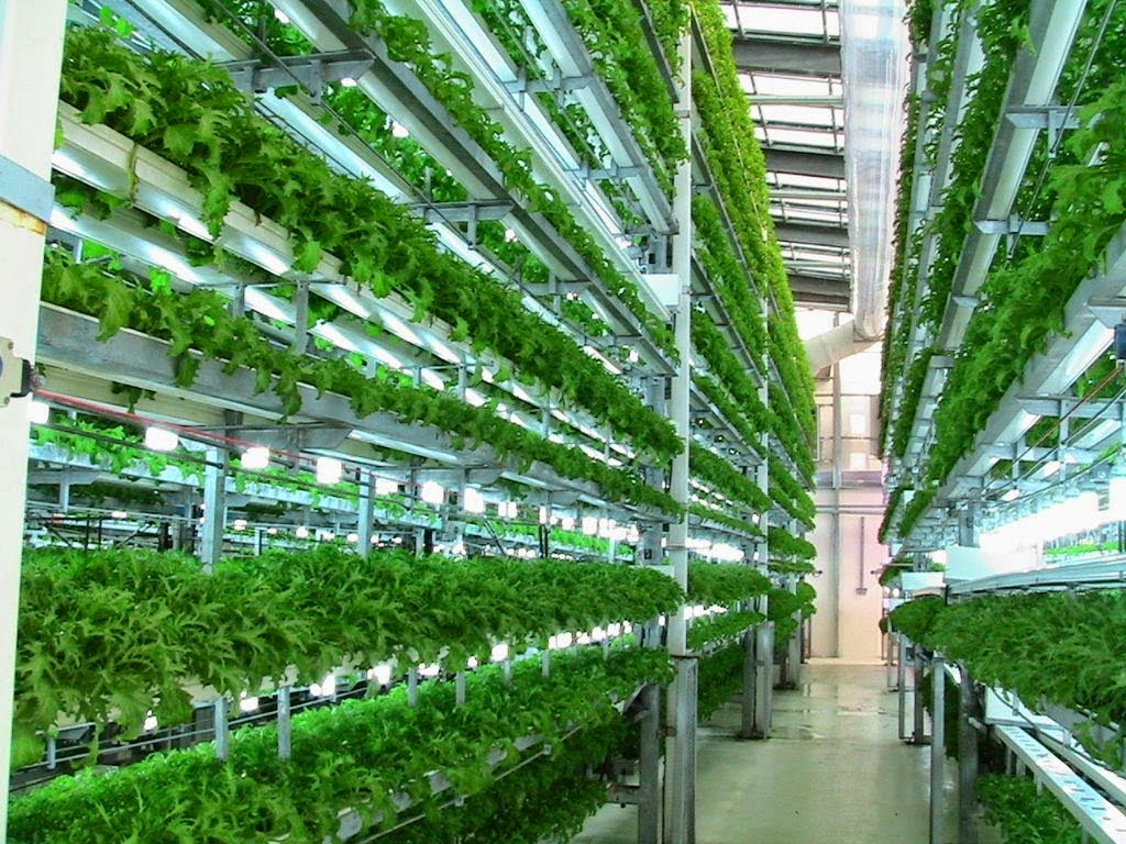 Aeroponic Farms (Image Courtesy www.worldwatch.org)