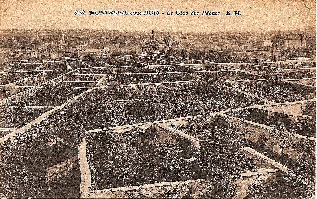 Fruit Walls in Montreuil / Low-Tech Magazine