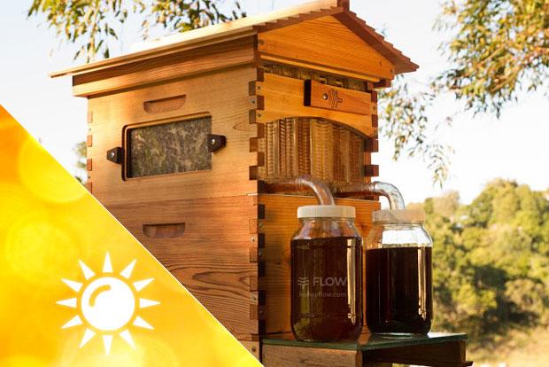 Flow Hive Bienenstock