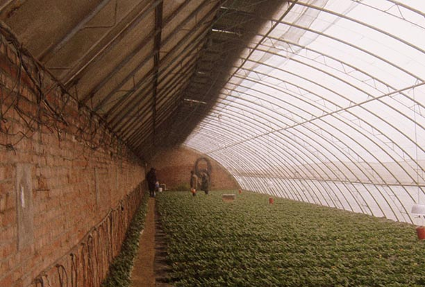 Chinese Passive Solar Greenhouse / Wikitravel