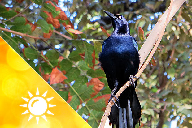 Im Regenwald von Panama
