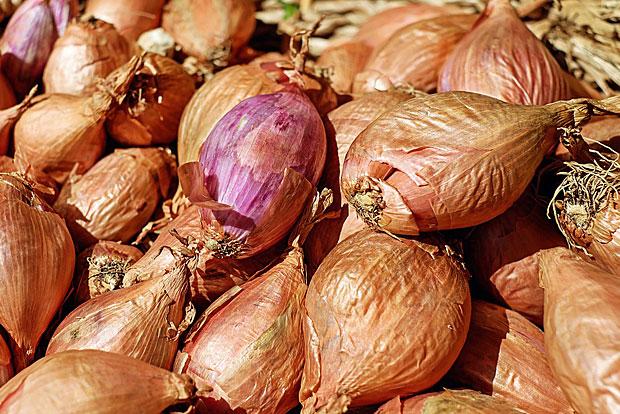 Zerkleinerte Zwiebel und Sellerie: beides lässt sich einfrieren, sofern es dann zum Kochen oder Braten verwendet wird. Sonst ist die Konsistenz nach dem Auftauen zu matschig.