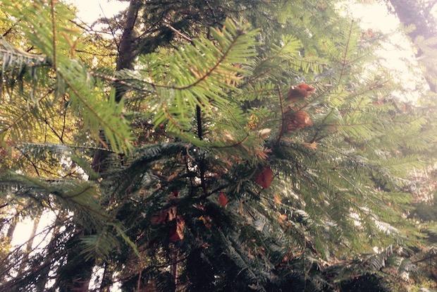 Der ökologische Weihnachtsbaum