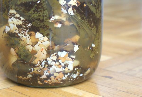Nähstoffextraktion - Die Küchenabfälle werden im Wasserkefir haltbar gemacht. Diese Lösung stinkt kaum.