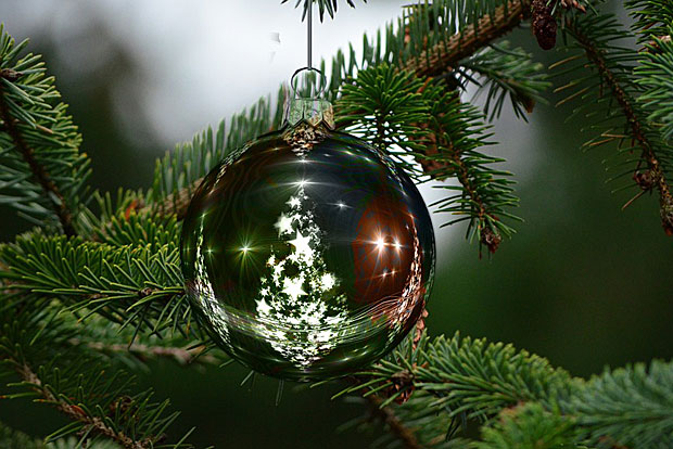 Wien Weihnachtsbaum Kaufen.Topliste Die Besten Bezugsquellen Für Bio Christbäume Energieleben
