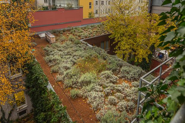 Boutique-Hotel Stadthalle - Dachgarten im Herbst
