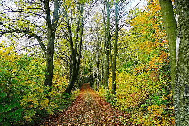 2. Ottakringer Wald