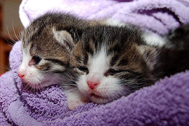 2. Katzenvideos ansehen