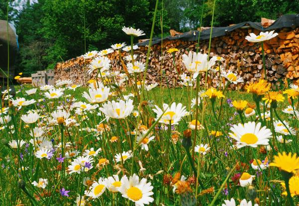 Blumenwiese bei einer Kräuterführung; Fotocredit: Anna Wahl