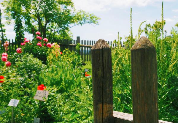 Kräutergarten einer Kräuterhexe; Fotocredit: Anna Wahl
