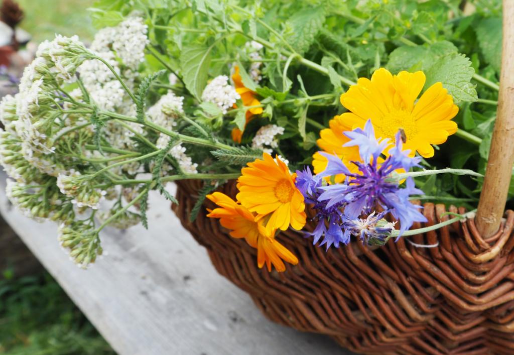Hausmittel und Kräuter für dein Wohlbefinden, Fotocredit: Anna Wahl