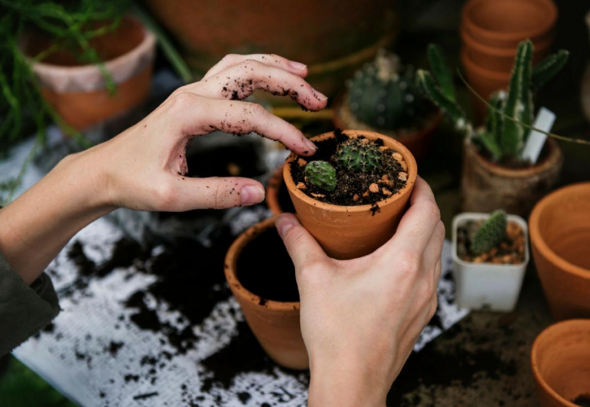 Der Indoor Garten Ein Gruner Trend Mit Wohlfuhl Faktor Fur Das