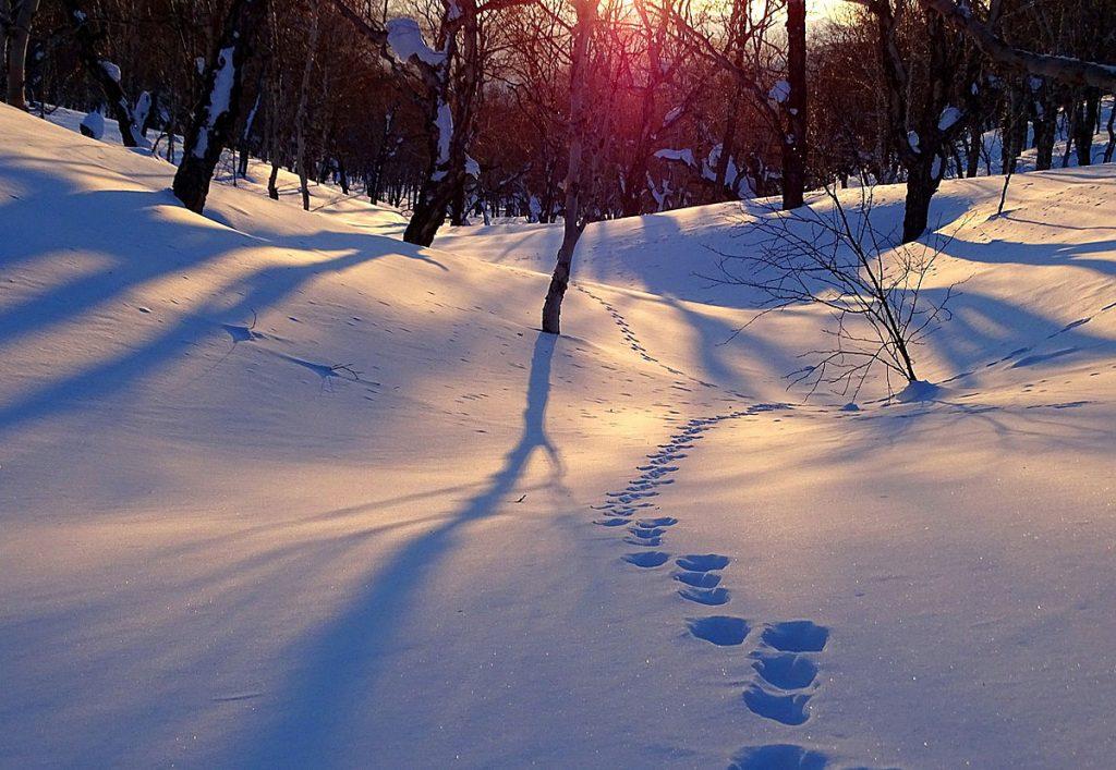1. Spazierengehen. Pack dich warm ein - und ab ins Freie! Eine halbe Stunde spazierengehen wirkt Wunder!