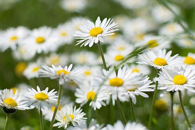 3. Frühlingsrezept: Leichte Blütenmuffins