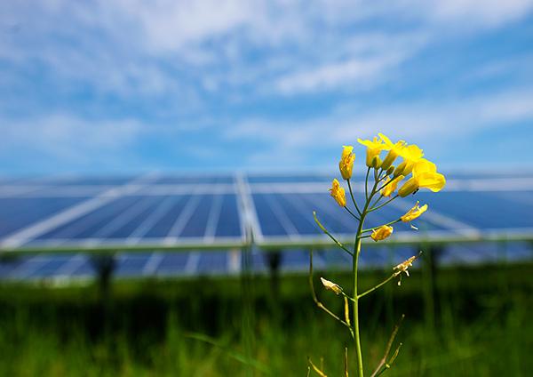 2) Solarkraft Bildrechte: Wien Energie/Wiener Wildnis - Popp-Hackner
