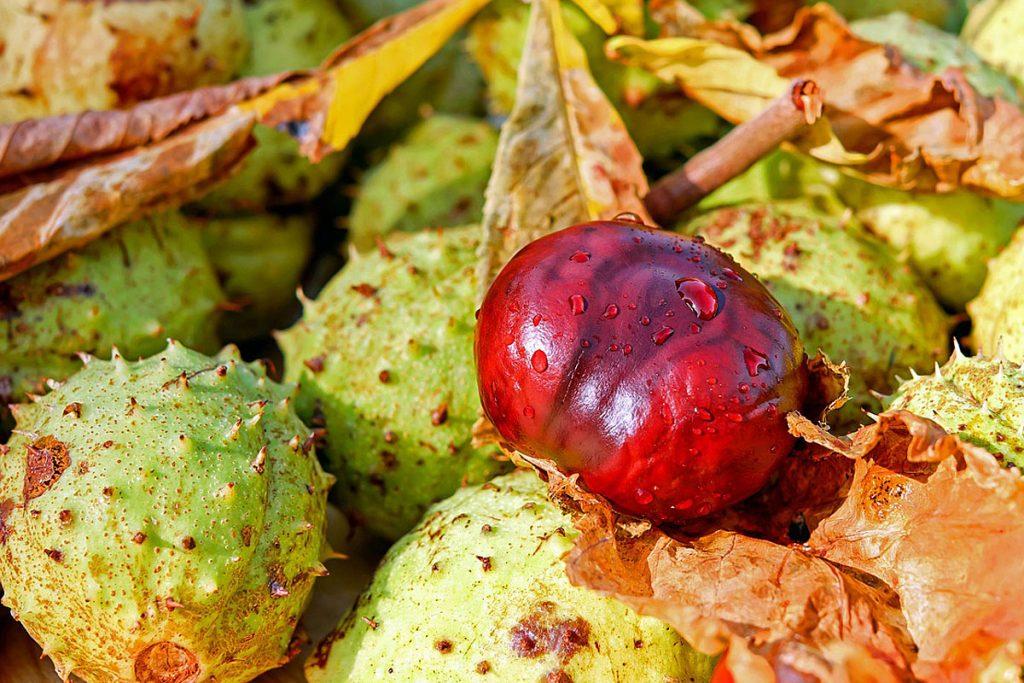 Ein paar Kastanien – mit und ohne Schale - in eine hübsche Schale legen, ergibt zum Beispiel eine wunderschöne Herbstdeko.