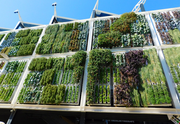 Vertikale Gärten - Photocredit: pixabay.com/faverzani