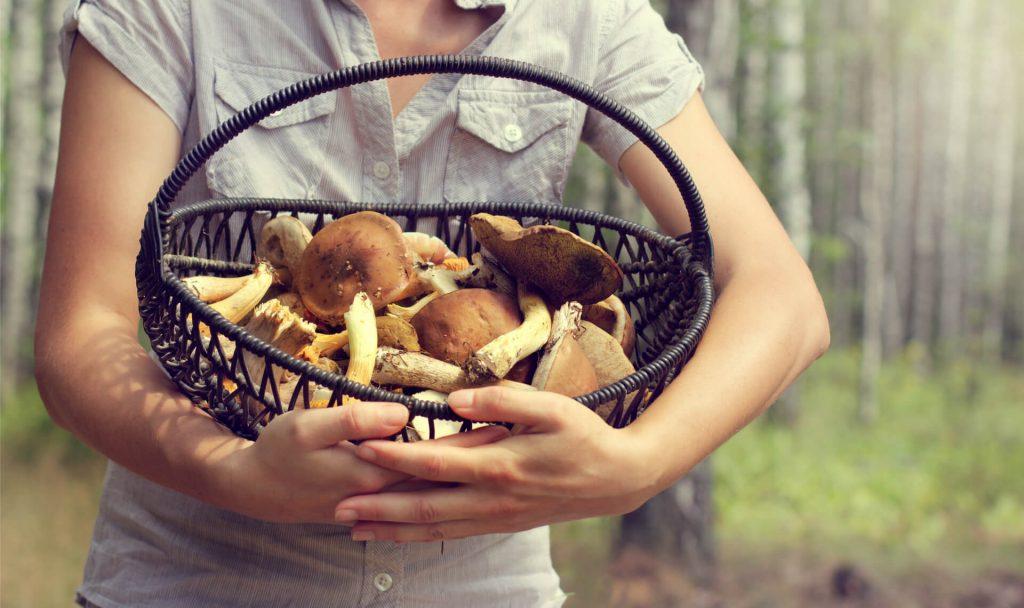 Pilze als Alternative; Fotocredit: Shutterstock/azem