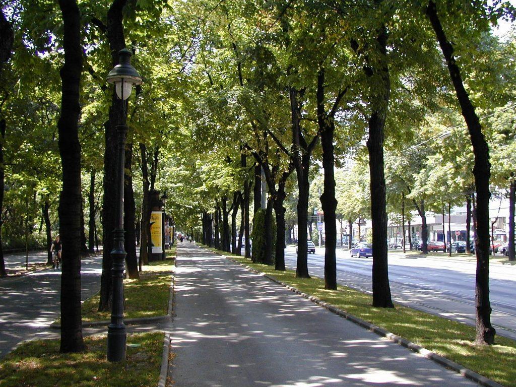 Baumallee bei der Ringstraße