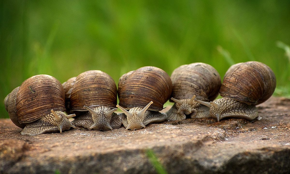 2. Pfeif auf Schneckenkorn, Dünger und Pestizide!