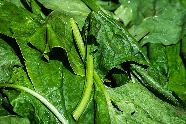 2. Spinat: 97 Prozent der Proben enthielten Pestizide
