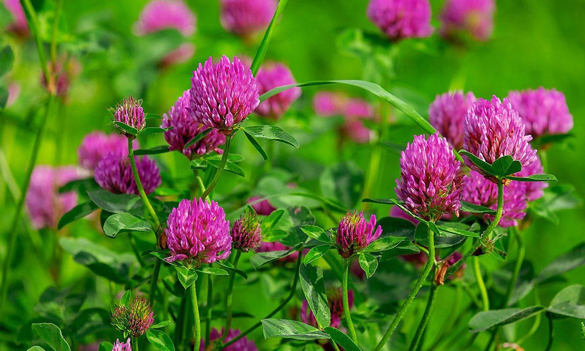 5. Lass Blumen auf deinem Rasen wachsen.