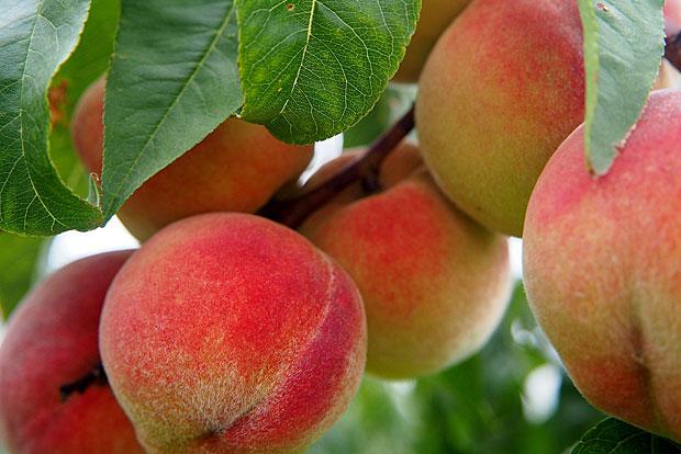 6. Pfirsiche: hHer waren sogar 99 Prozent der Proben belastet