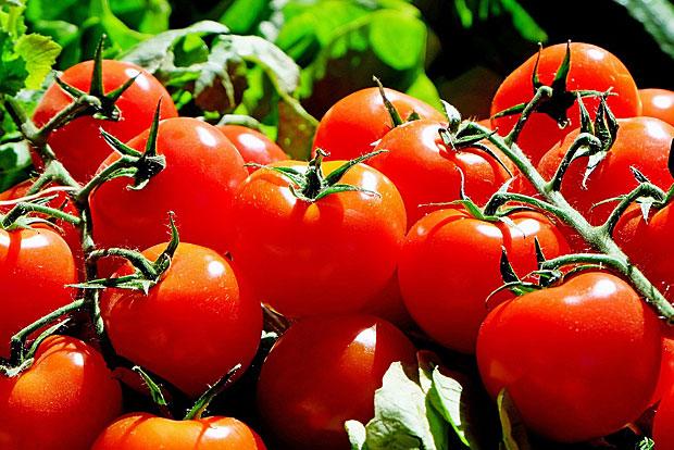 9. Tomaten: Eine der Proben enthielt sogar 15 verschiedene Pestizide