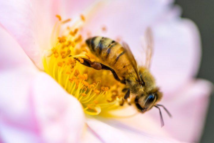 Stopp dem Bienensterben