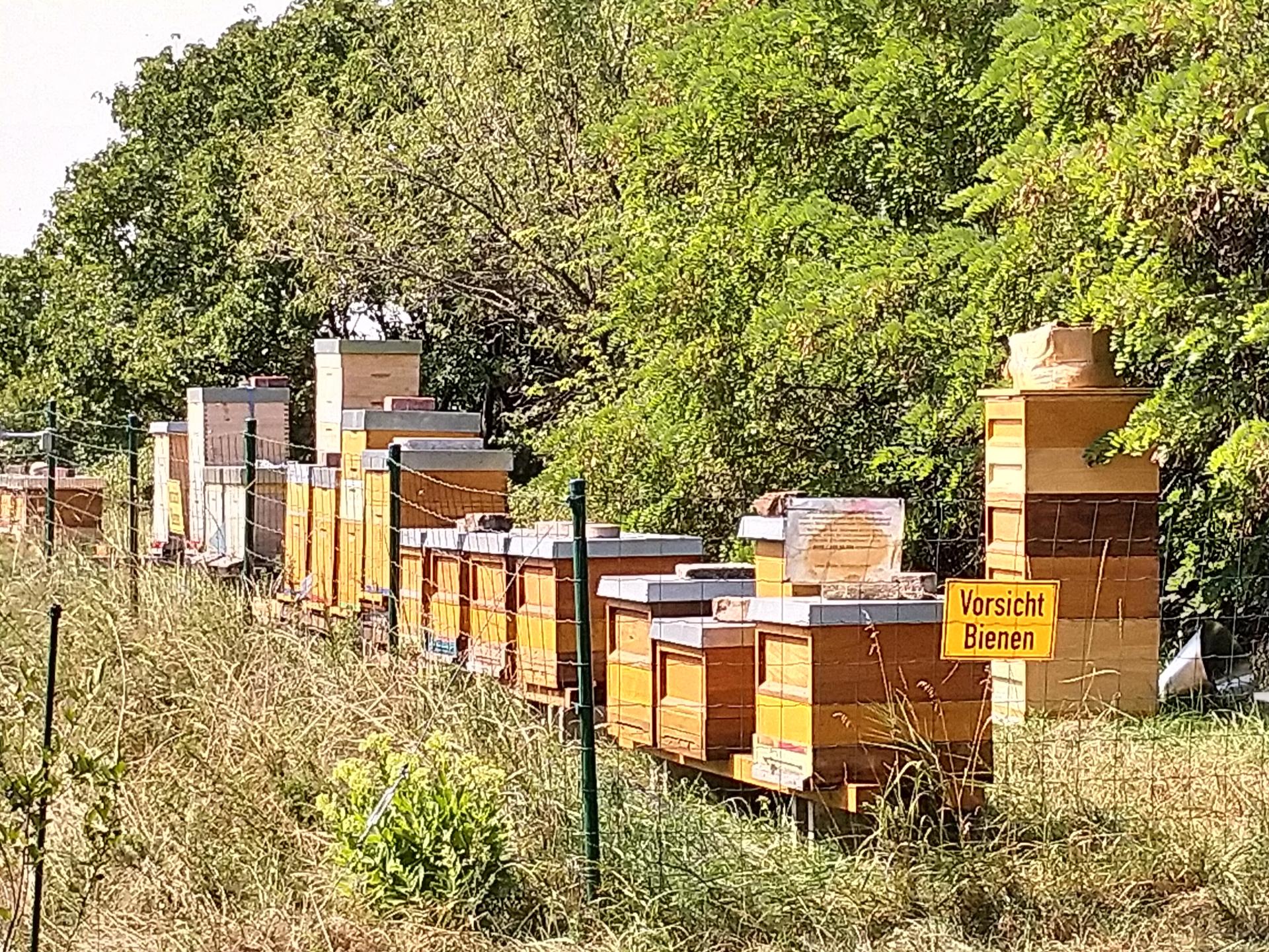 Umzäunte Bienenvölker im Stadtgebiet