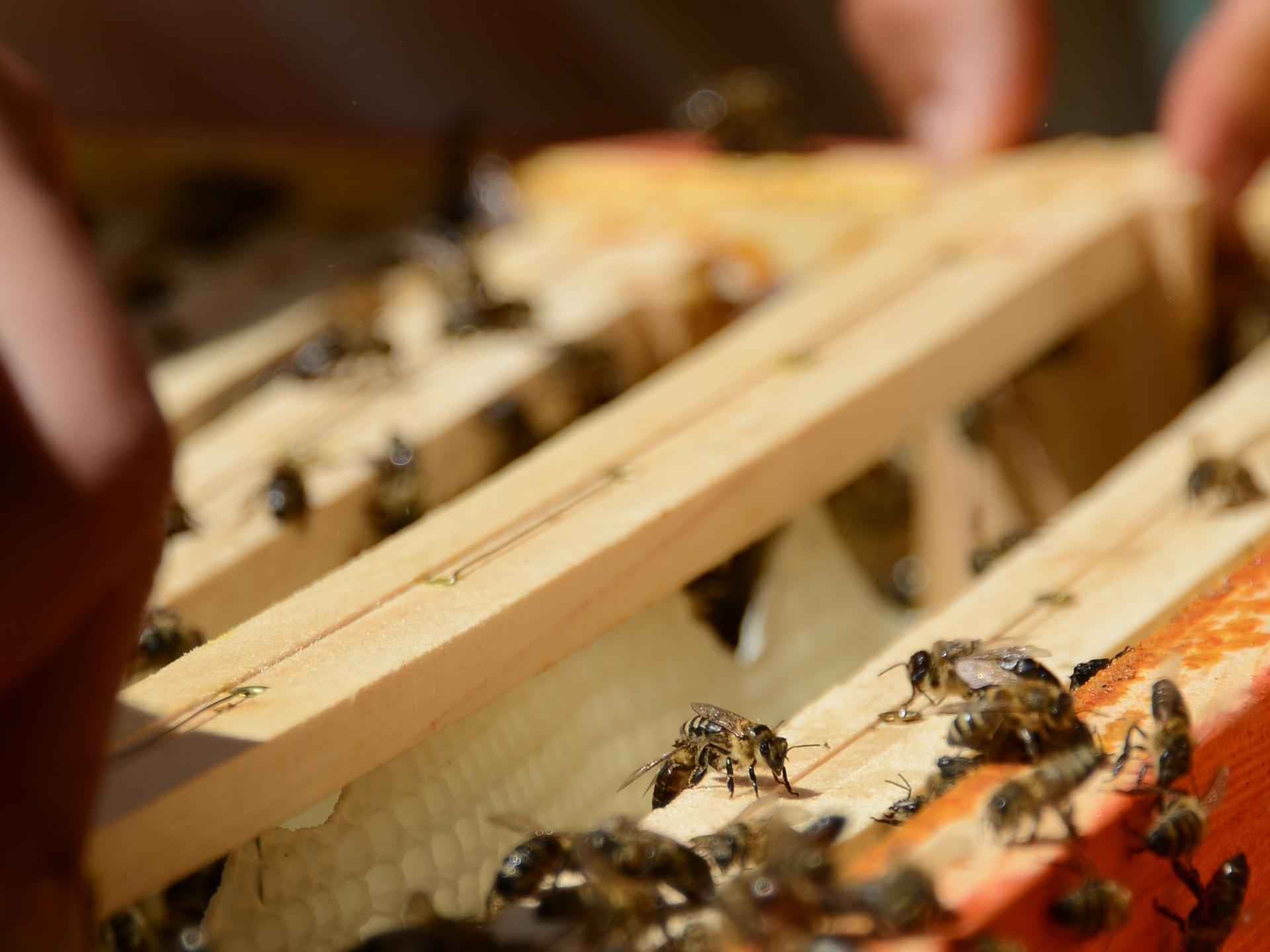 Bienenwaben in einer Box