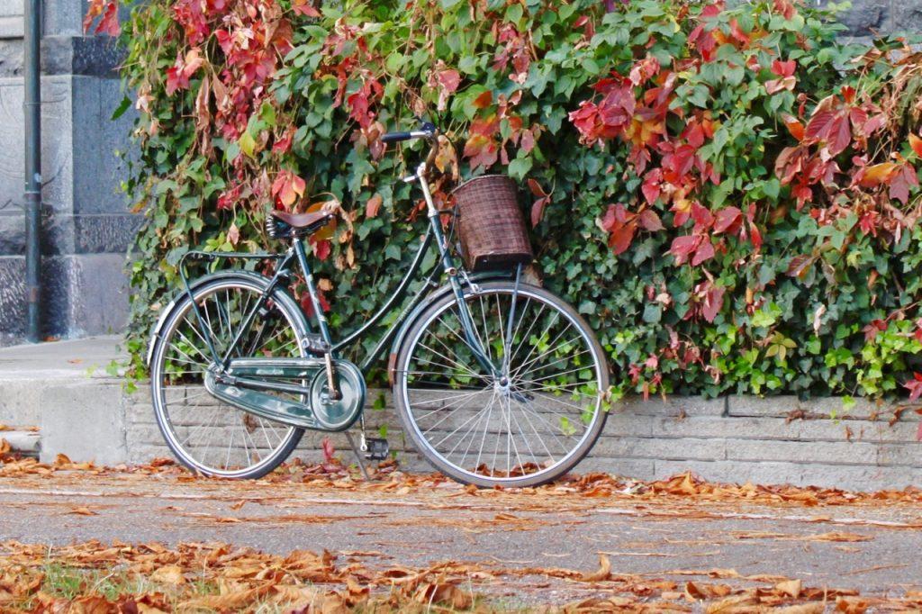 Radfahren im Herbst (C) the green walnuts