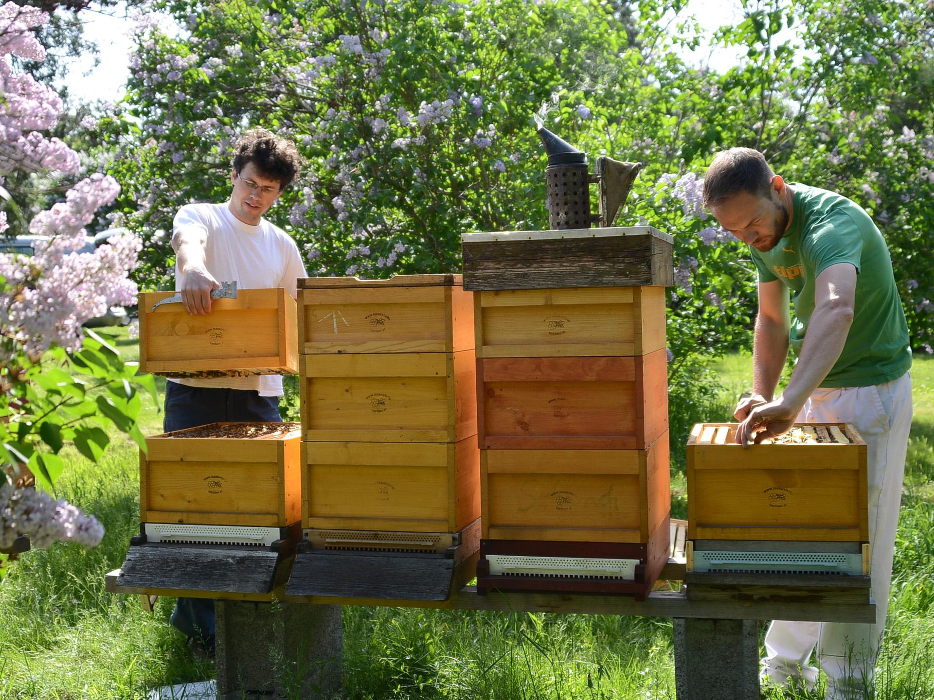 Bienen Innovationszentrum