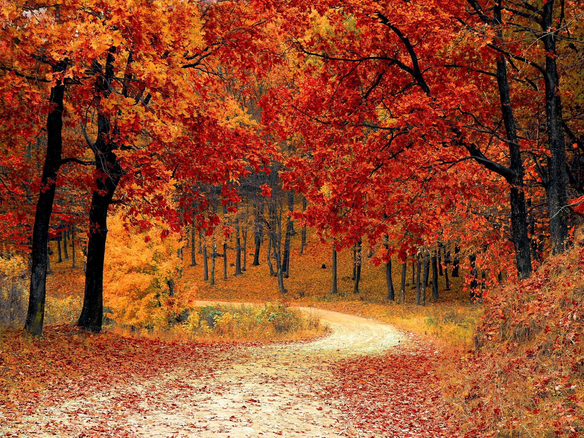 Durch das Zurückziehen der Energien verfärben sich die Blätter der Bäume in alle Schattierungen von gelb bis rot. - Photocredit: pixabay.com/valiunic