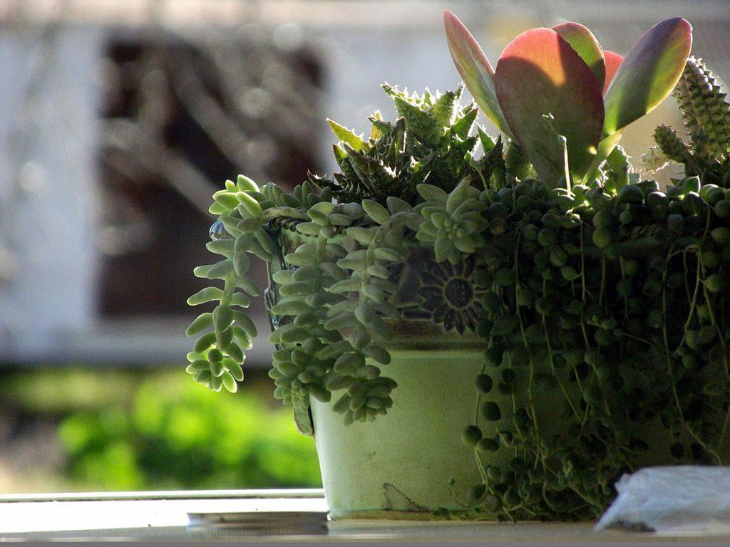 Zimmerpflanzen sind bei Millennials beliebt
