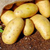 Plastik lässti sich aus Kartoffelstärke herstellen; Fotocredit: Pixabay/Couleur