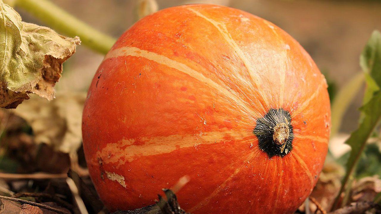 2. Wahre Winterwunder: Karotten, Paprikaschoten, Lauch, Nüsse und Kürbis. - Fotocredit: pixabay/pixel2013