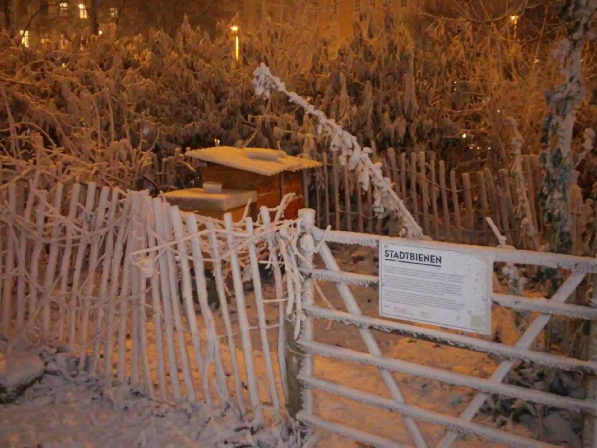 Vor allem brauchen die Bienen im Winter viel Ruhe. - Photocredit: bienenzentrum.wien/Marian Aschenbrenner