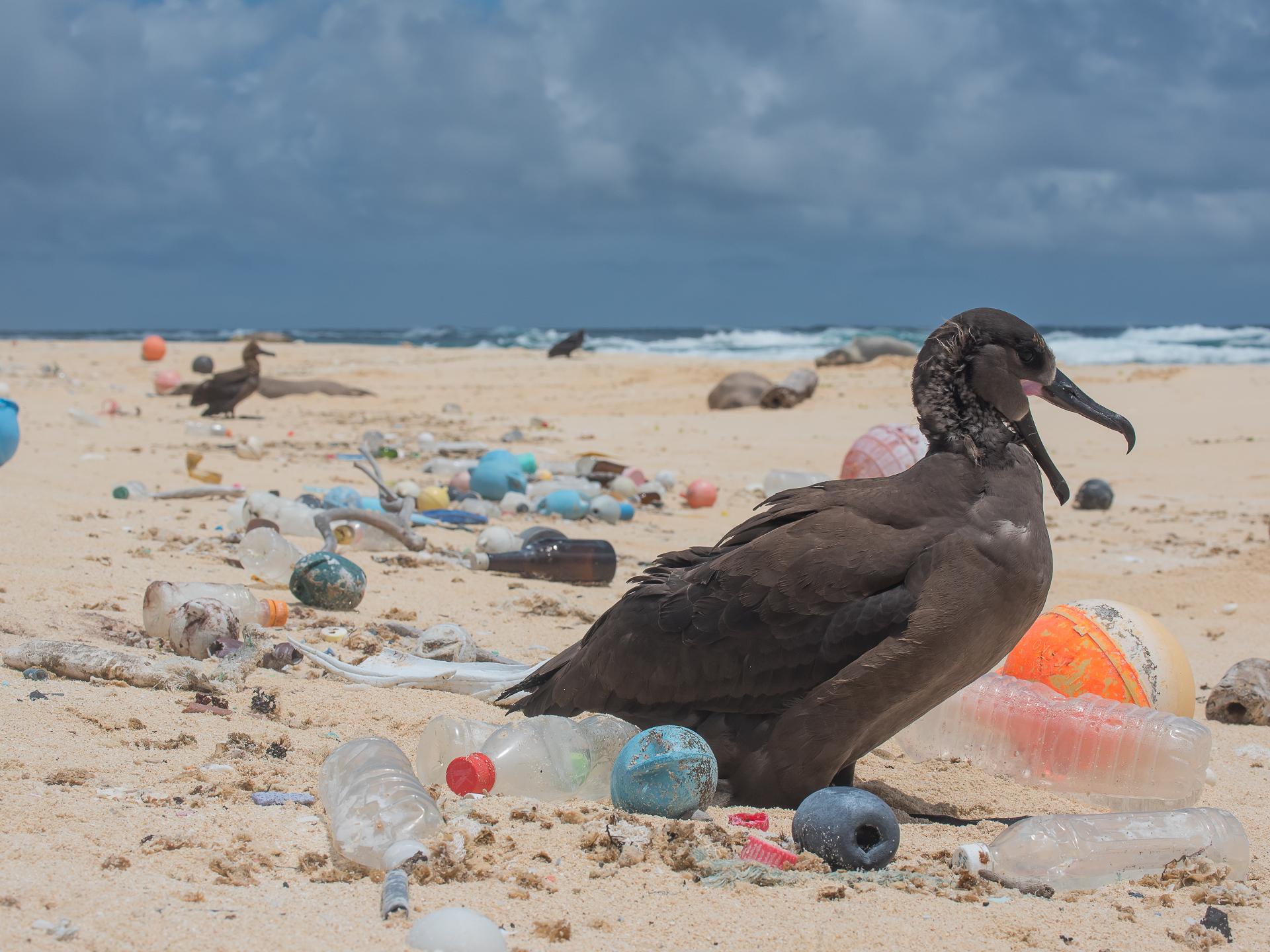 Das Plastik aus dem Meer wird teilweise an den Strand gespühlt. Aber lange nicht alles. - Photocredit: theoceancleanup.com/Matthew Chauvin
