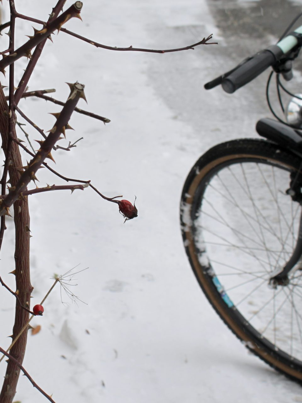 Radfahren im Schnee / Fotocredit: Pia Minixhofer